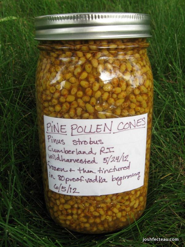 Photo of Pine Pollen Cone tincture