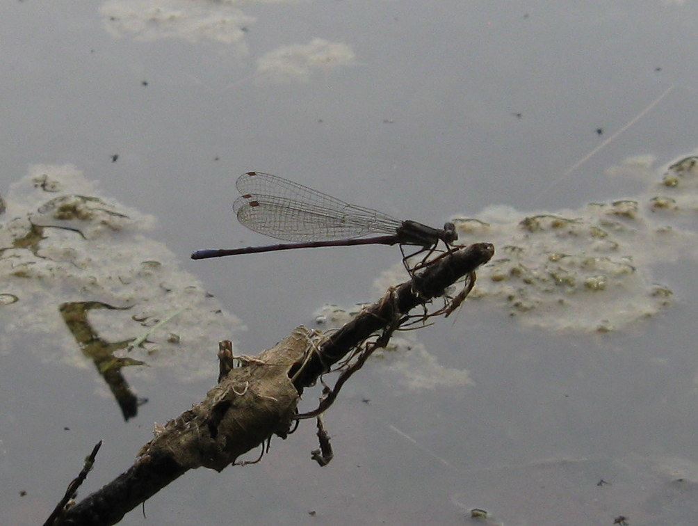 Photo of Damselfly