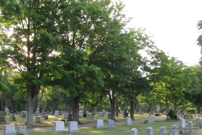 Photo of Plainville Cemetery Sugar Maples