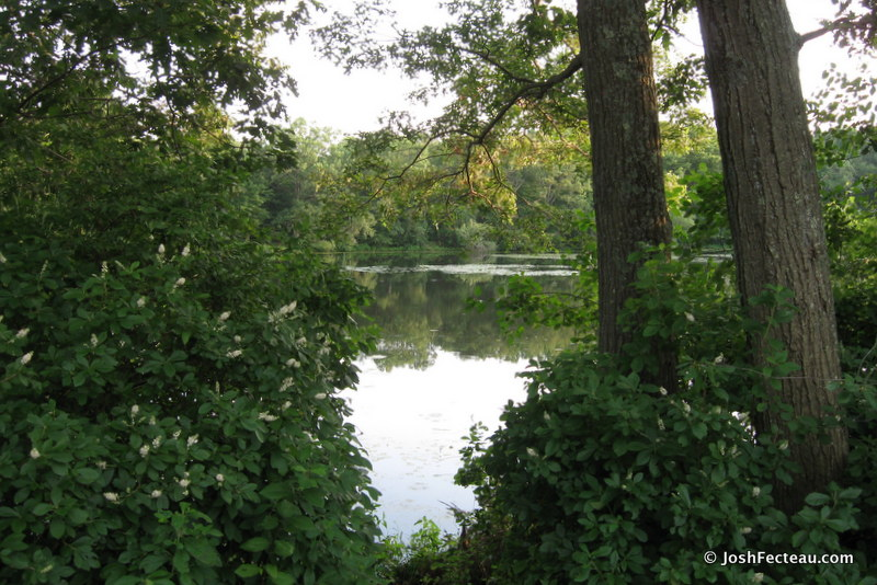 Photo of Wetherells Pond