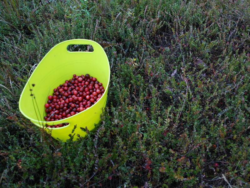 Photo of Cranberry bucket