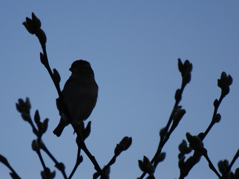 Photo of Bird on a Branch