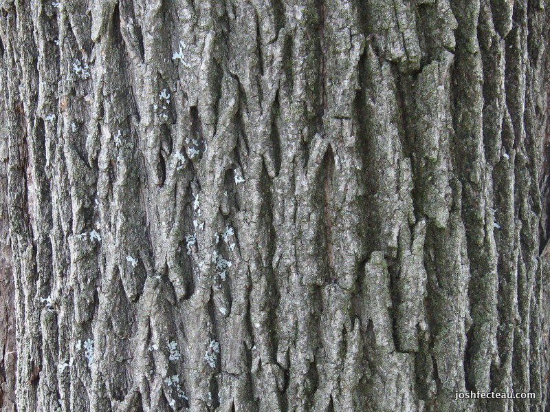 Photo of Bark Pattern