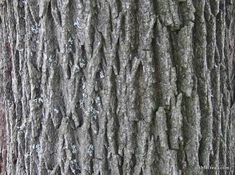 Photo of Bark Pattern