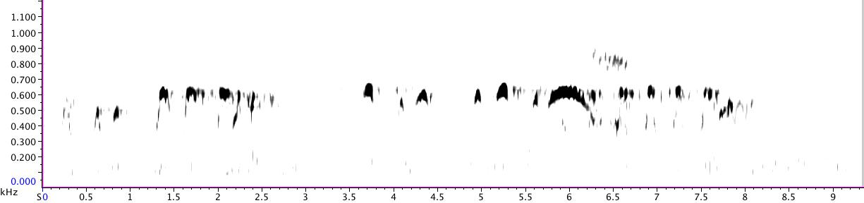 Spectrogram of Barred Owls