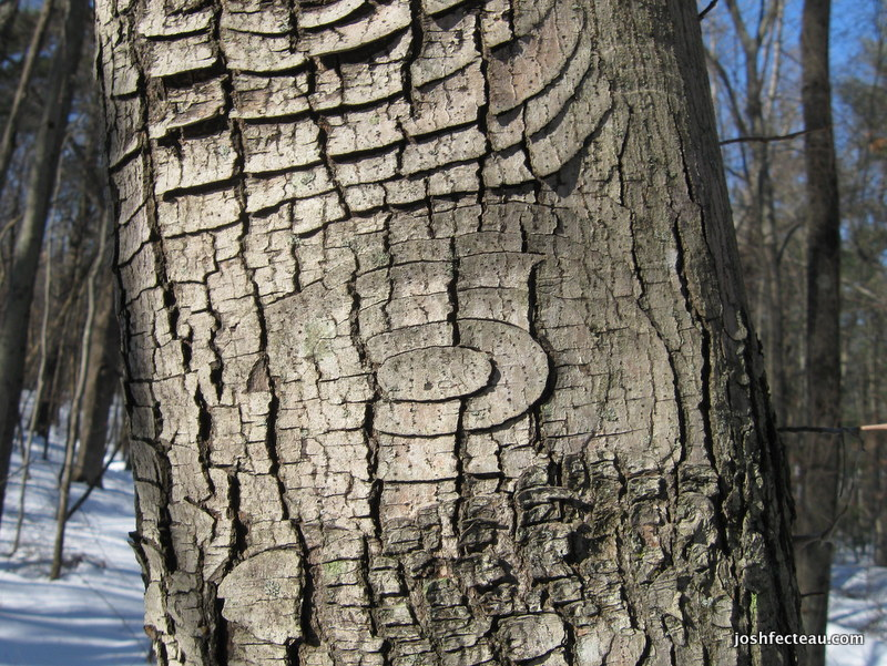 Photo of Bark