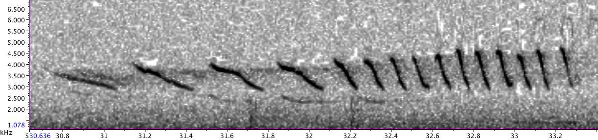 Photo of Field Sparrow spectrogram