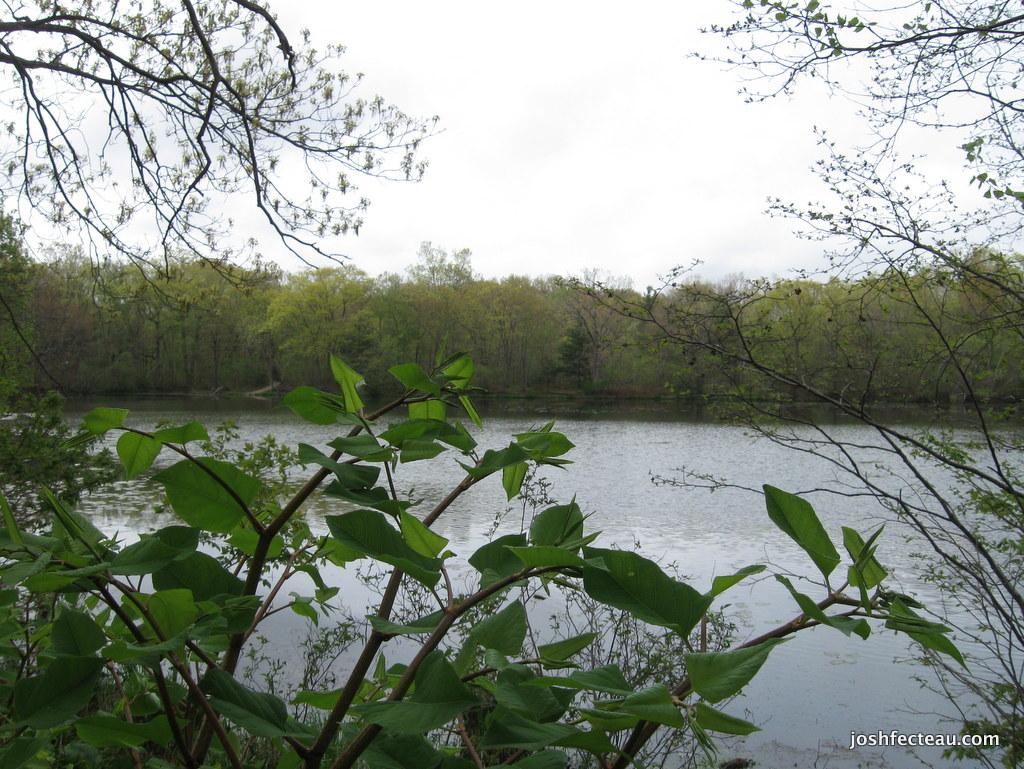 Photo of Pond Scene