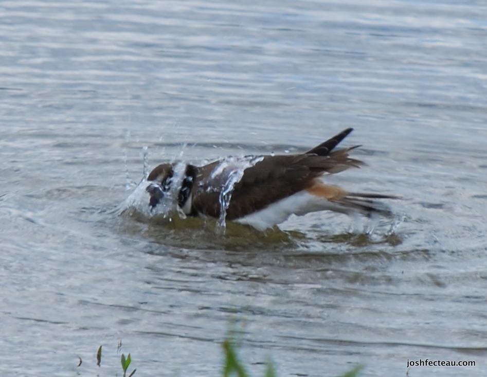 Photo of Quiz #58: Bird
