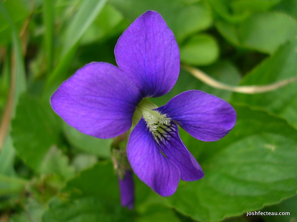 Rhode Island Wildflowers