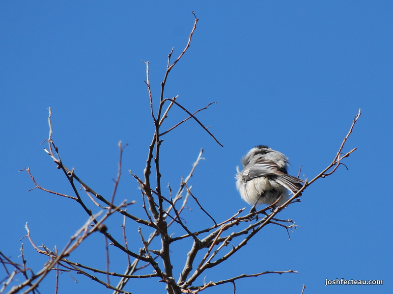 Photo of Quiz #84: Bird