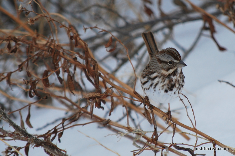 Photo of Quiz #88: Bird Answer