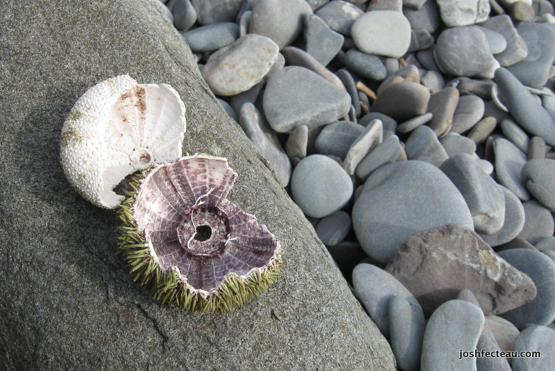 Photo of Sea Urchin remains