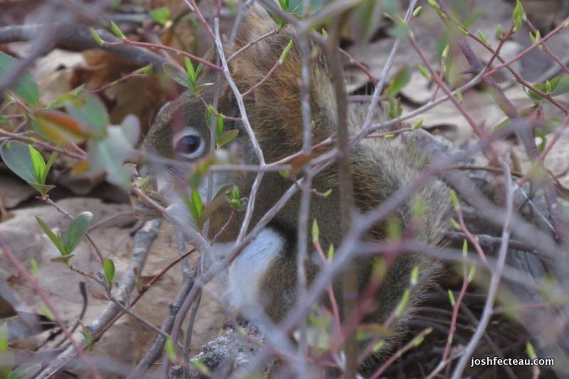 Photo of Quiz #101: Mammal