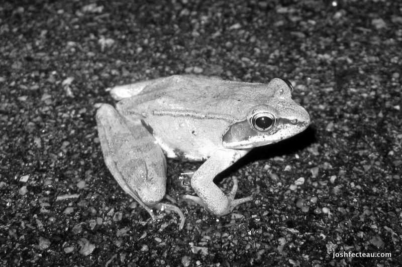 Photo of Quiz #99: Amphibian