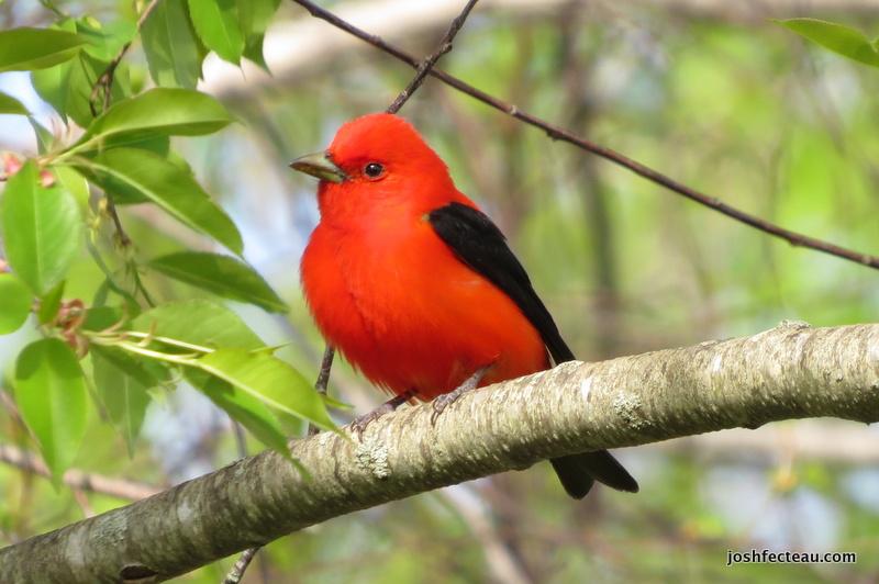 Photo of Quiz #104: Bird (Answer)