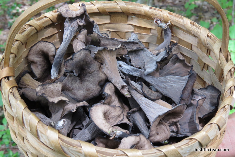 Photo of Black Trumpet basket