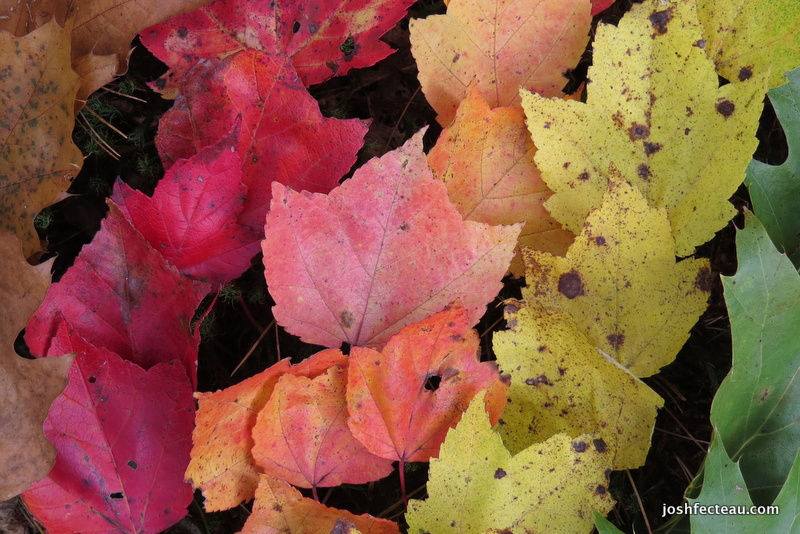 Photo of Fallen Leaf Art