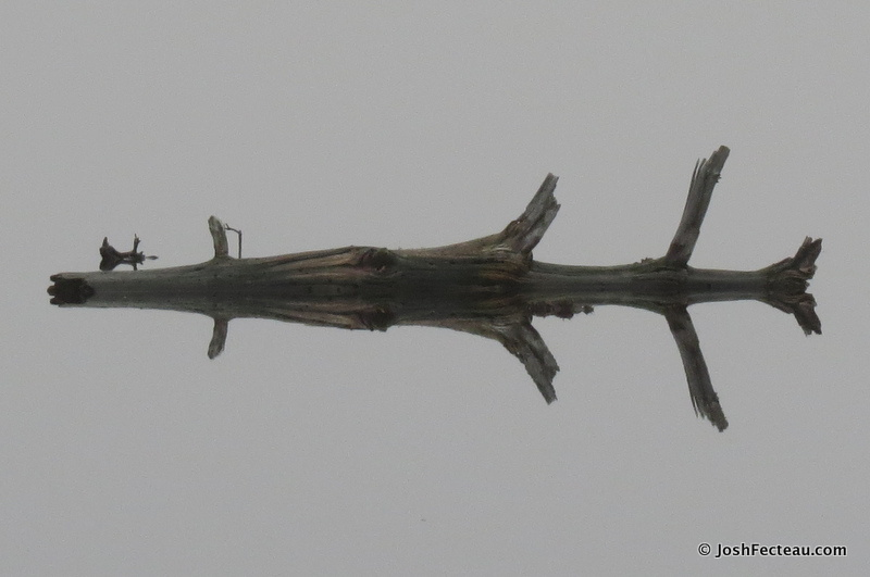 Photo of Tree Reflection