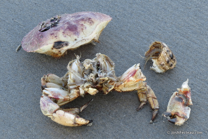 Photo of Johan Crab parts