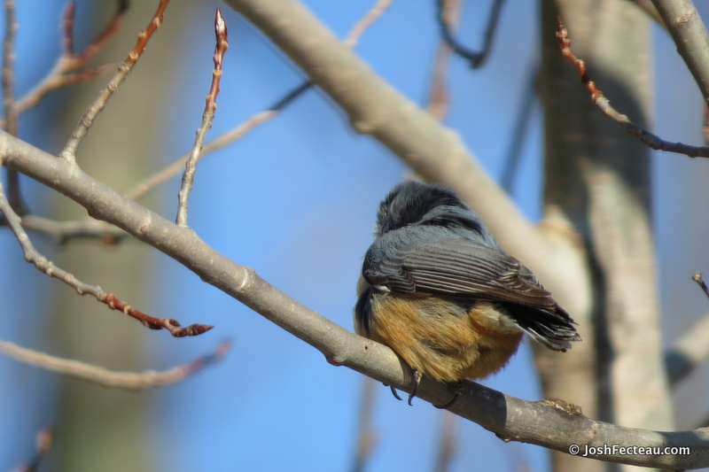 Photo of Quiz #138: Bird