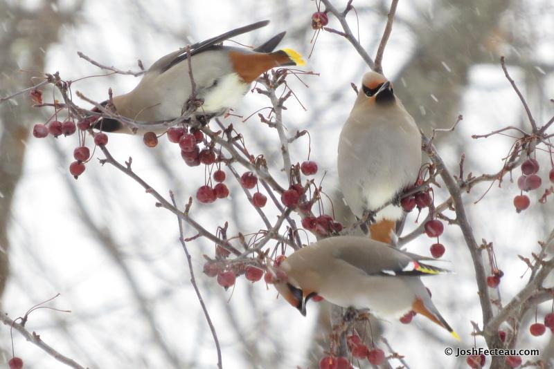Photo of Quiz #141: Bird