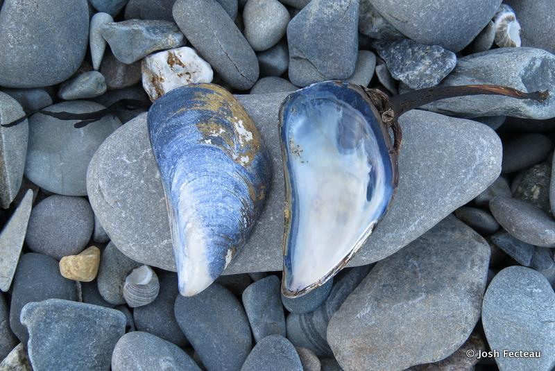 Photo of Quiz 152: Seashore