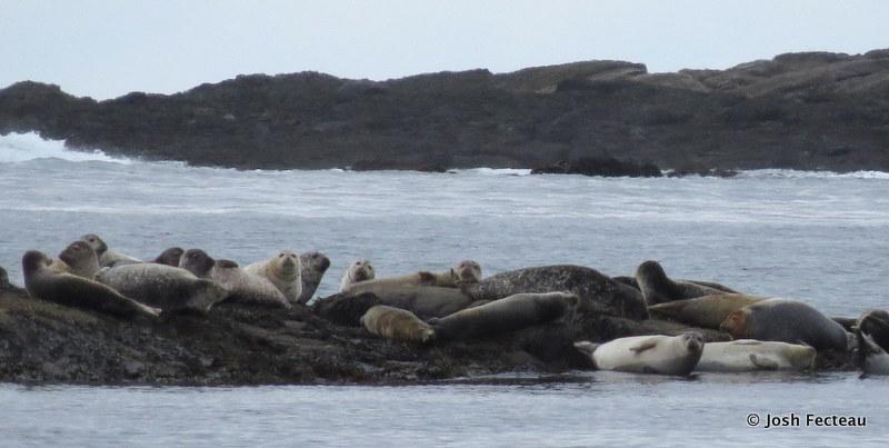 Photo of Seals