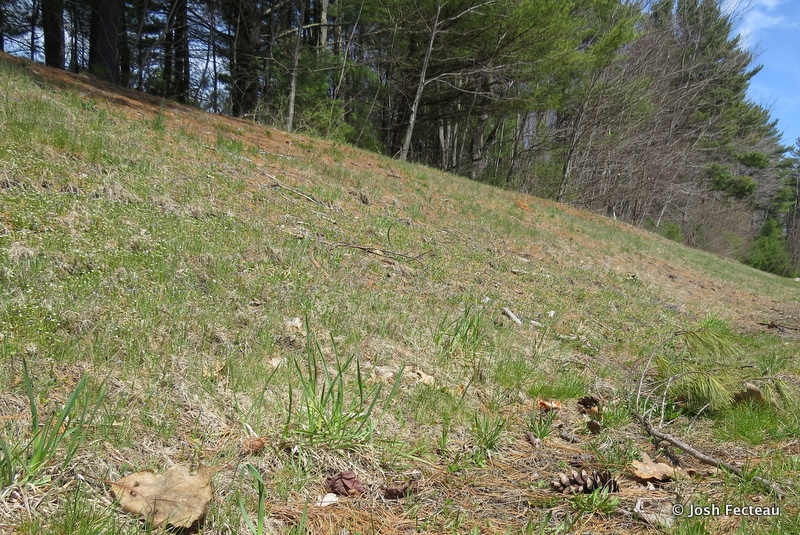 Photo of Hillside of tiny flowers