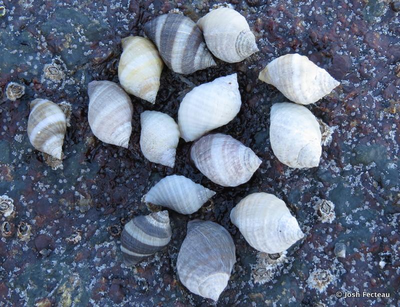 Photo of Quiz #155: Seashore