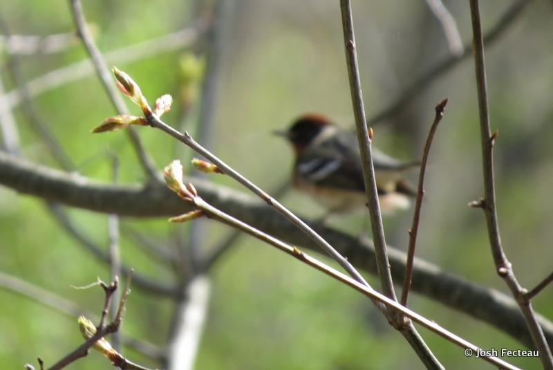 Photo of Quiz #157: Bird