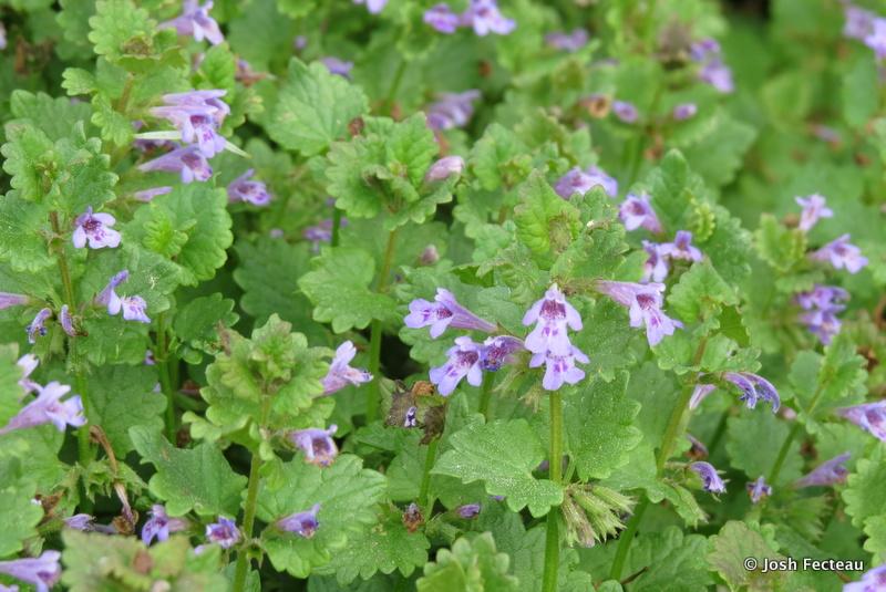Photo of Quiz #158: Plant