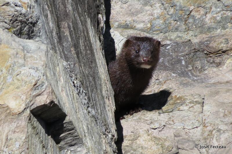 Photo of Quiz #161: Mammal