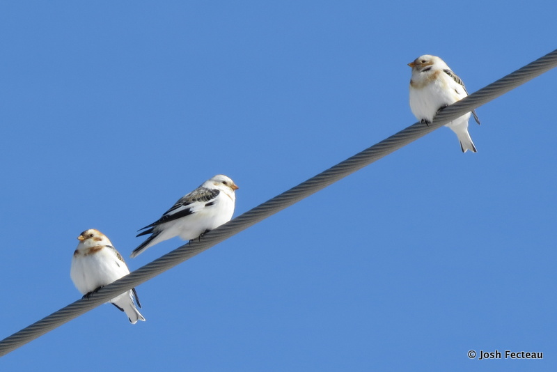 Photo of Quiz #165: Bird