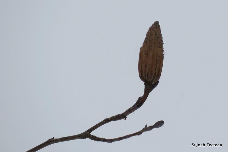 Photo of Quiz #167: Tree