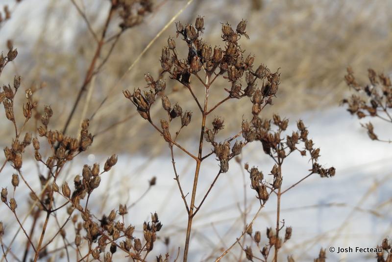 Photo of Quiz #169: Plant