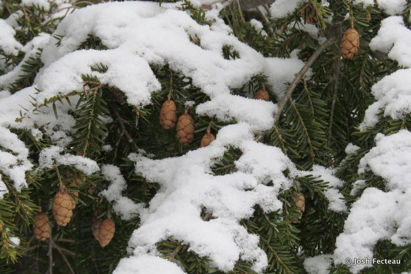 Photo of Quiz #170: Tree