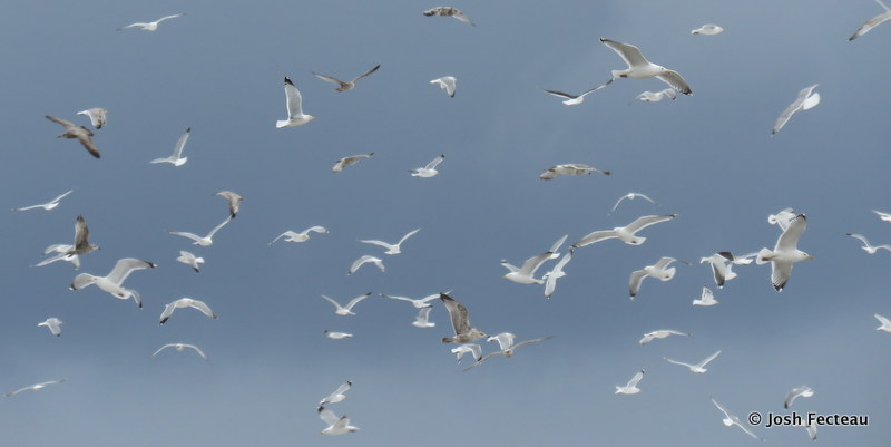 Photo of Gulls