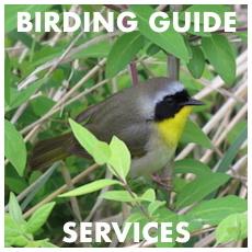 Birding Guide Services