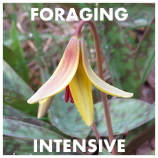 Spring Foraging 5-Week Intensive