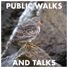 Public Walks & Talks