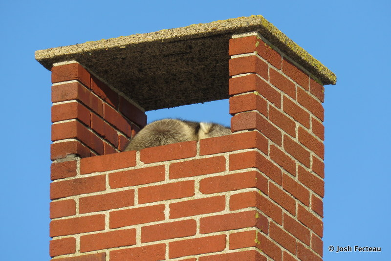 Photo of Quiz #173: Mammal
