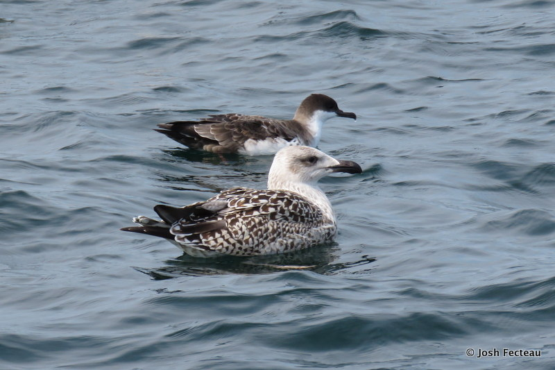 Photo of Quiz #187: Pelagic